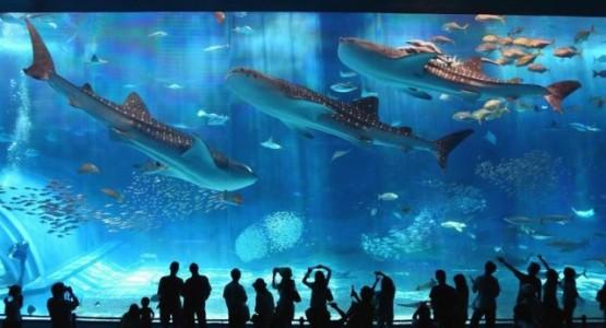 gioi-thieu-ve-thuy-cung-vinpearlland-aquarium-times-city-0121