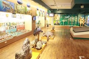 TOP địa điểm vui chơi cho bé không thể bỏ lỡ vào dịp nghỉ hè ở gần Hà Nội - bảo tàng thiên nhiên