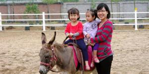 TOP địa điểm vui chơi cho bé không thể bỏ lỡ vào dịp nghỉ hè ở gần Hà Nội detrangfarm