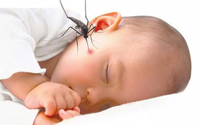 Cảnh báo bùng phát dịch sốt xuất huyết ở cả người lớn lẫn trẻ nhỏ 1